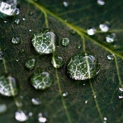 Drops of water on leaves
